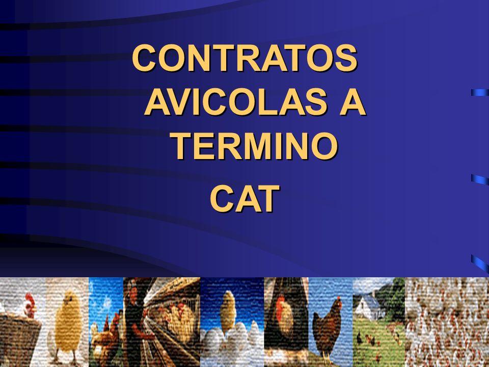 CONTRATOS AVICOLAS A TERMINO CAT CONTRATOS AVICOLAS A TERMINO CAT