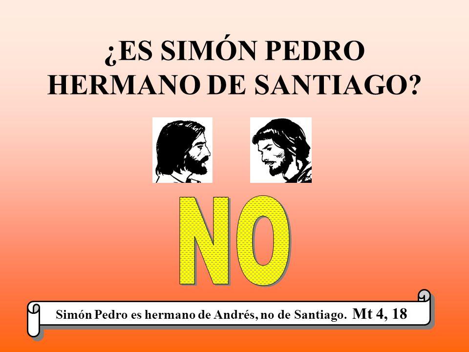 ¿ES SIMÓN PEDRO HERMANO DE SANTIAGO? Simón Pedro es hermano de Andrés, no de Santiago. Mt 4, 18