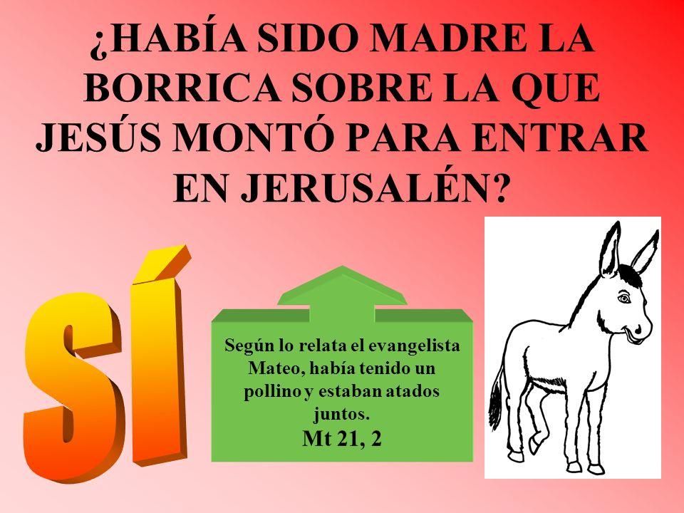 ¿HABÍA SIDO MADRE LA BORRICA SOBRE LA QUE JESÚS MONTÓ PARA ENTRAR EN JERUSALÉN? Según lo relata el evangelista Mateo, había tenido un pollino y estaba