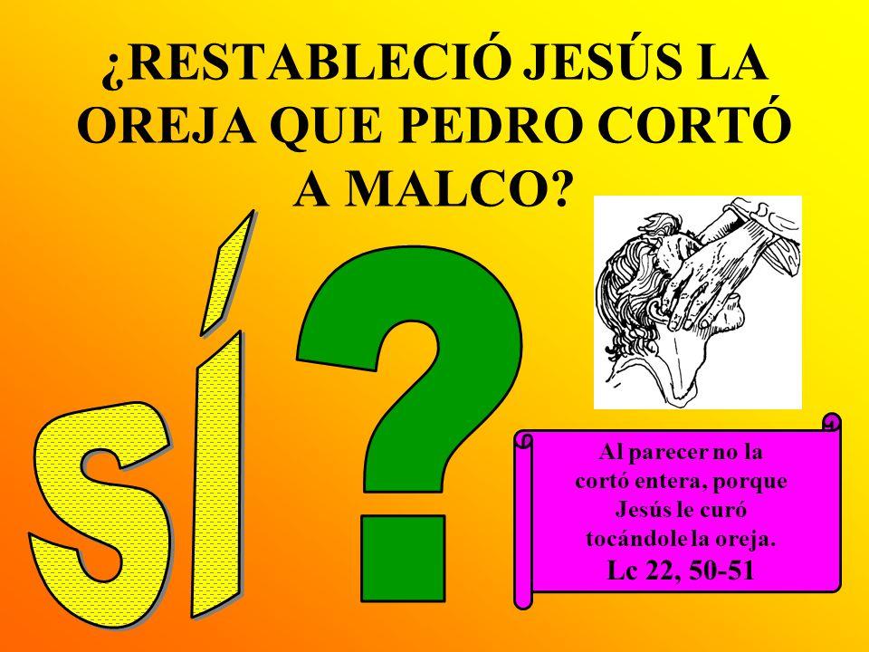 ¿RESTABLECIÓ JESÚS LA OREJA QUE PEDRO CORTÓ A MALCO? Al parecer no la cortó entera, porque Jesús le curó tocándole la oreja. Lc 22, 50-51