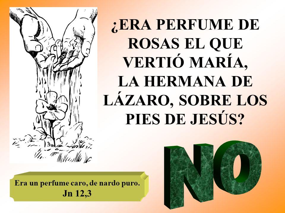 ¿ERA PERFUME DE ROSAS EL QUE VERTIÓ MARÍA, LA HERMANA DE LÁZARO, SOBRE LOS PIES DE JESÚS? Era un perfume caro, de nardo puro. Jn 12,3
