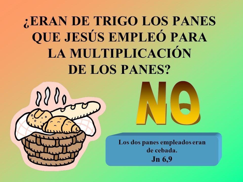 ¿ERAN DE TRIGO LOS PANES QUE JESÚS EMPLEÓ PARA LA MULTIPLICACIÓN DE LOS PANES? Los dos panes empleados eran de cebada. Jn 6,9