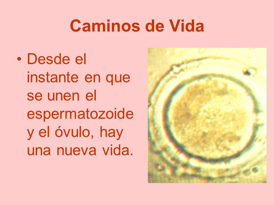 Caminos de Vida Desde el instante en que se unen el espermatozoide y el óvulo, hay una nueva vida.
