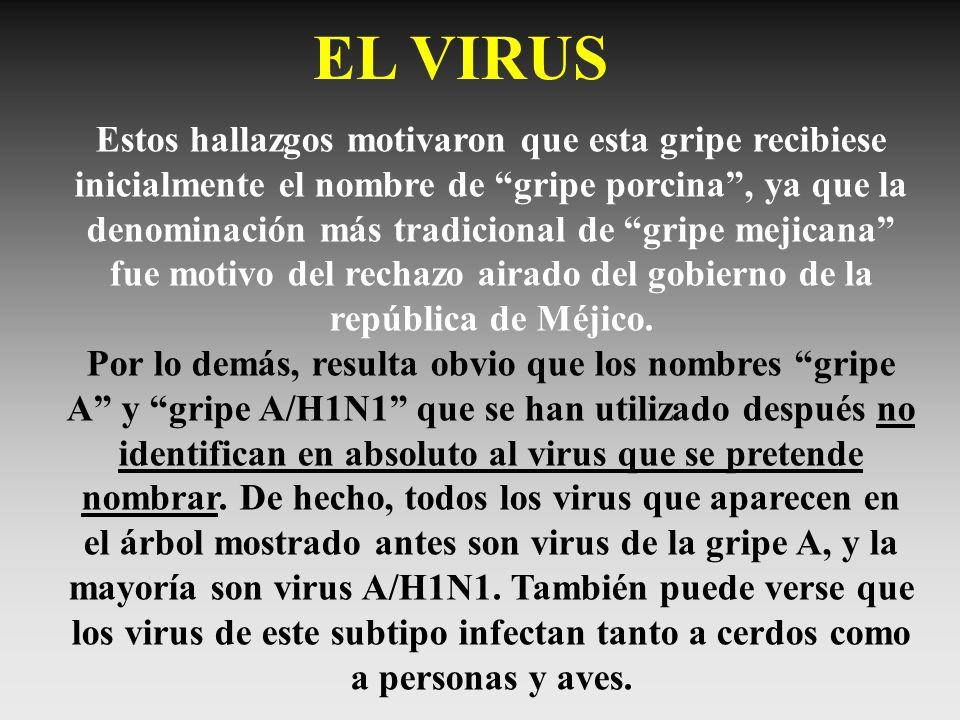 Estos hallazgos motivaron que esta gripe recibiese inicialmente el nombre de gripe porcina, ya que la denominación más tradicional de gripe mejicana f