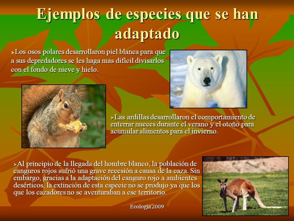 Ecología 2009 Ejemplos de especies que se han adaptado Los osos polares desarrollaron piel blanca para que a sus depredadores se les haga mas difícil