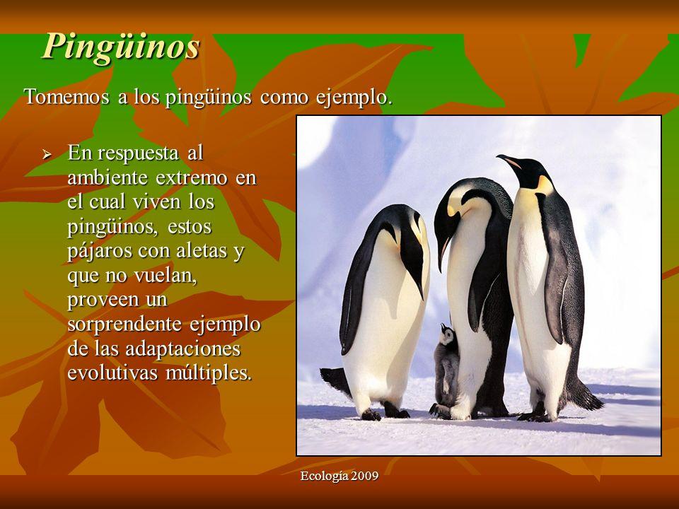 Ecología 2009 Pingüinos En respuesta al ambiente extremo en el cual viven los pingüinos, estos pájaros con aletas y que no vuelan, proveen un sorprend