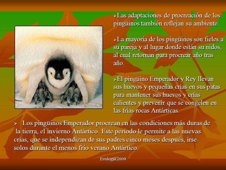 Ecología 2009 Los pingüinos Emperador procrean en las condiciones más duras de Los pingüinos Emperador procrean en las condiciones más duras de la tie