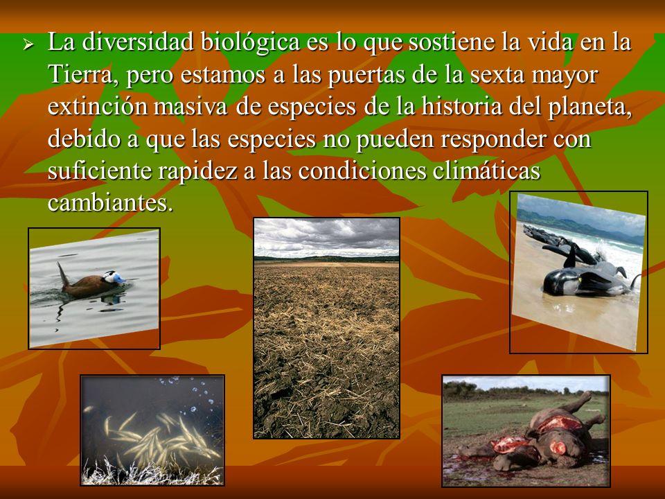 La diversidad biológica es lo que sostiene la vida en la Tierra, pero estamos a las puertas de la sexta mayor extinción masiva de especies de la histo