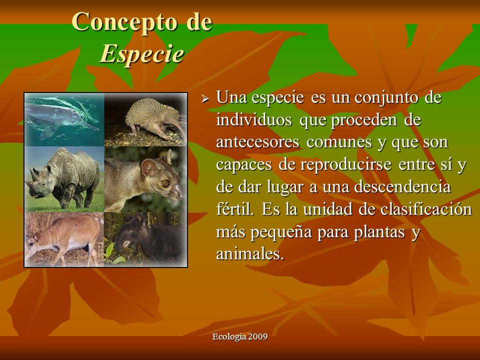 Concepto de Especie Una especie es un conjunto de individuos que proceden de antecesores comunes y que son capaces de reproducirse entre sí y de dar l