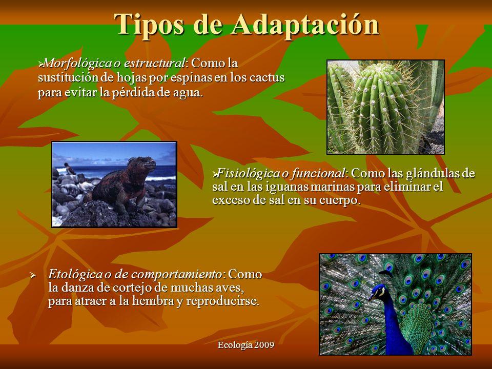 Ecología 2009 Tipos de Adaptación Etológica o de comportamiento: Como la danza de cortejo de muchas aves, para atraer a la hembra y reproducirse. Etol