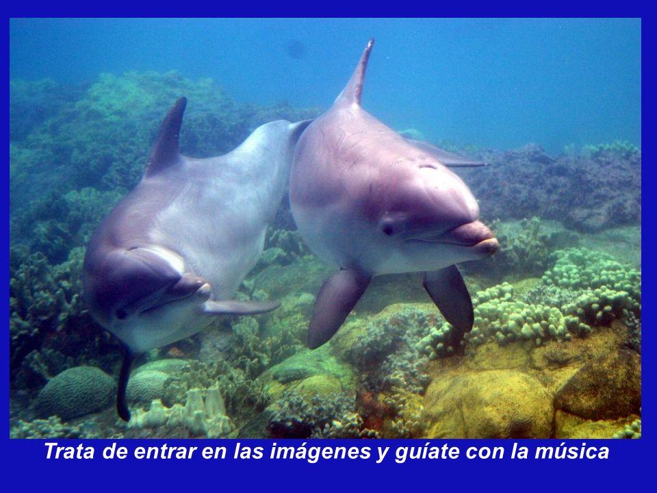 Un Delfín en el vientre de su Madre