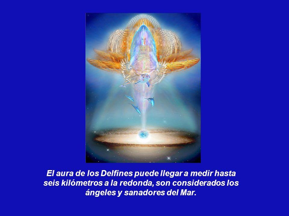 El aura de los Delfines puede llegar a medir hasta seis kilómetros a la redonda, son considerados los ángeles y sanadores del Mar.
