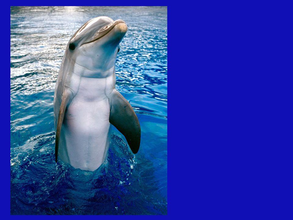 El mensaje de los delfines es el AMOR UNIVERSAL, Lo que nos enseñan los delfines es simplemente la alegría de jugar por el juego y no por el premio, e