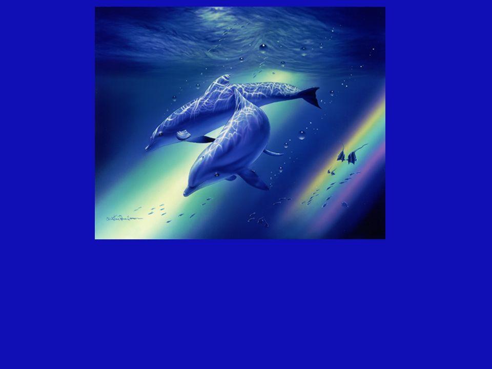 A pesar que este hermoso delfín vive en cautiverio, de manera Incondicional sirve como sanador al pequeño que está por nacer en el vientre de esta madre.