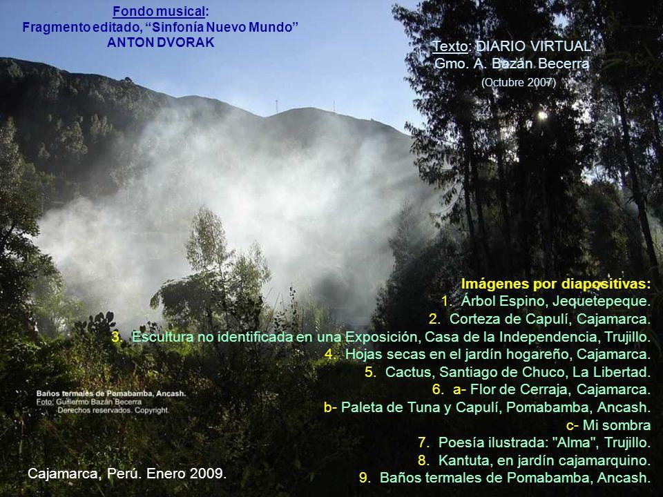 Imágenes por diapositivas: 1.Árbol Espino, Jequetepeque.