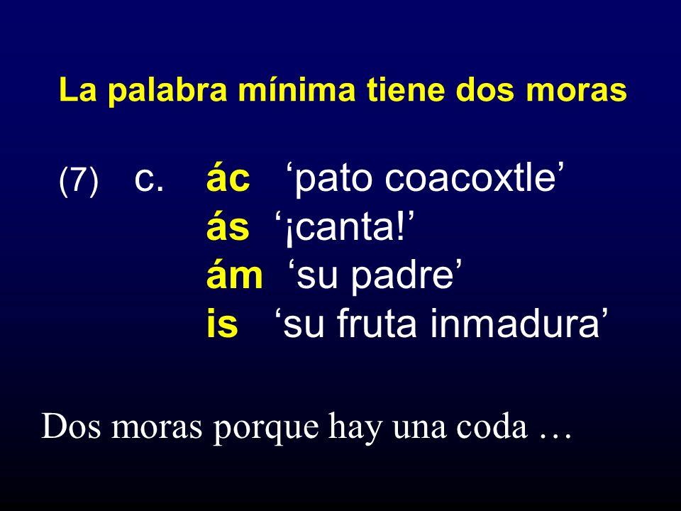 (7) c. ác pato coacoxtle ás ¡canta! ám su padre is su fruta inmadura La palabra mínima tiene dos moras Dos moras porque hay una coda …