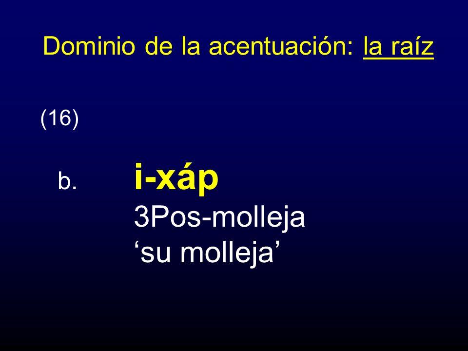 Dominio de la acentuación: la raíz (16) b. i-xáp 3Pos-molleja su molleja