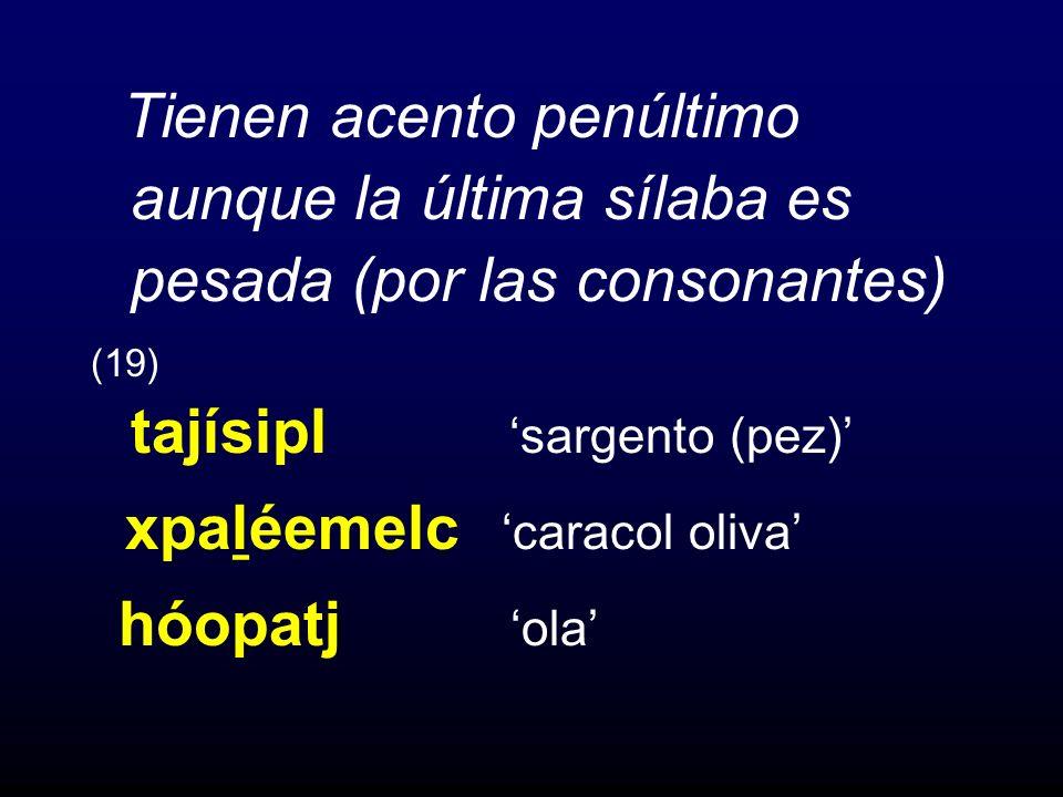 Tienen acento penúltimo aunque la última sílaba es pesada (por las consonantes) (19) tajísipl sargento (pez) xpal ̱ éemelc caracol oliva hóopatj ola