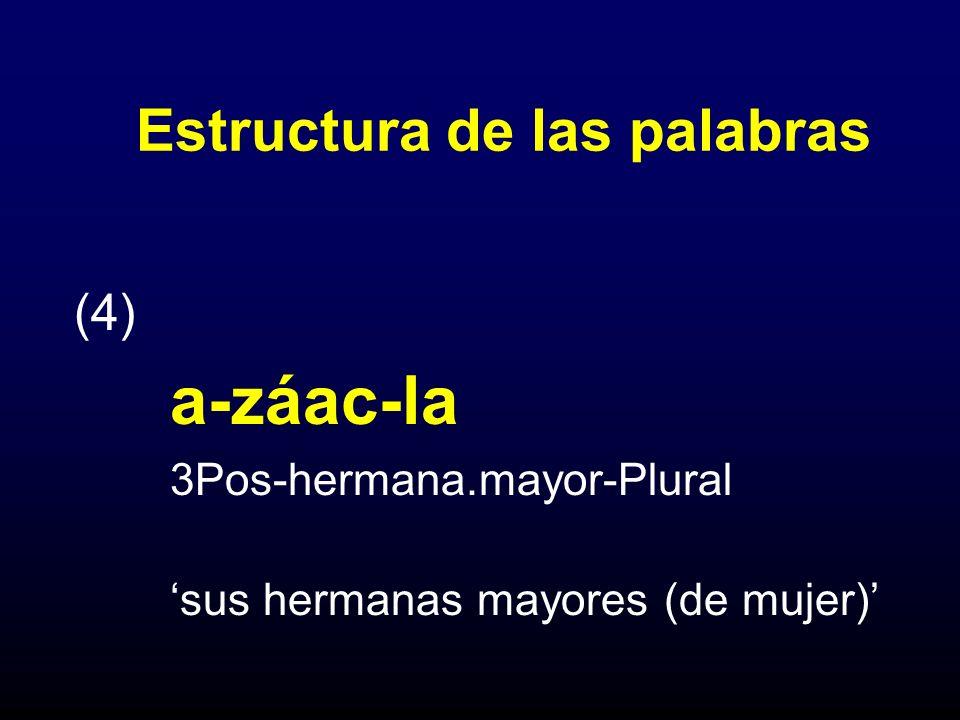 Estructura de las palabras (4) a-záac-la 3Pos-hermana.mayor-Plural sus hermanas mayores (de mujer)