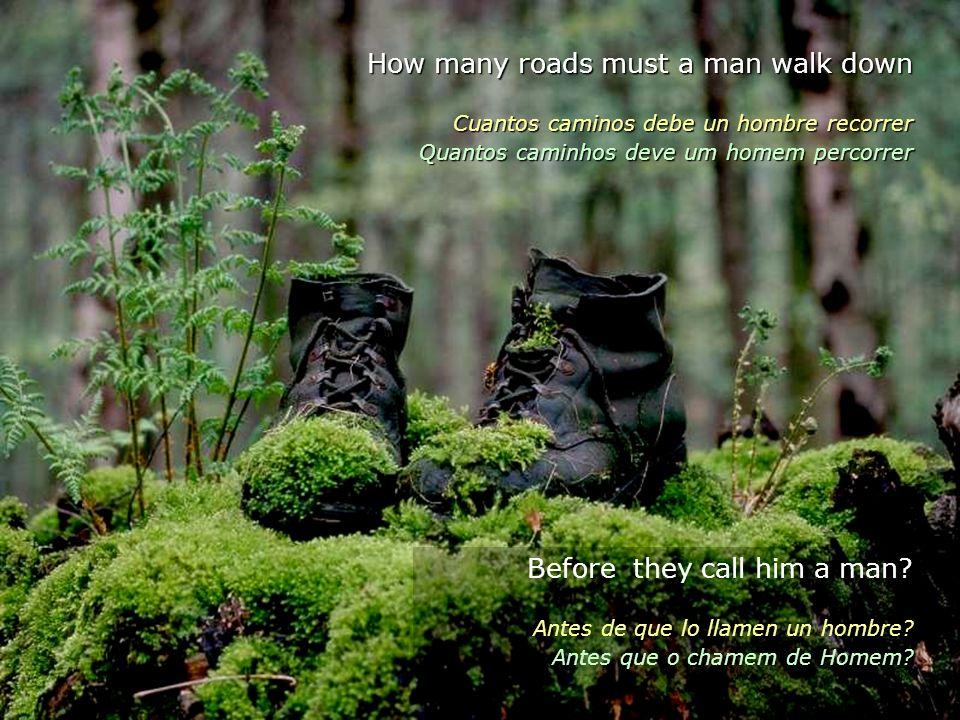 How many roads must a man walk down Cuantos caminos debe un hombre recorrer Quantos caminhos deve um homem percorrer Before they call him a man.