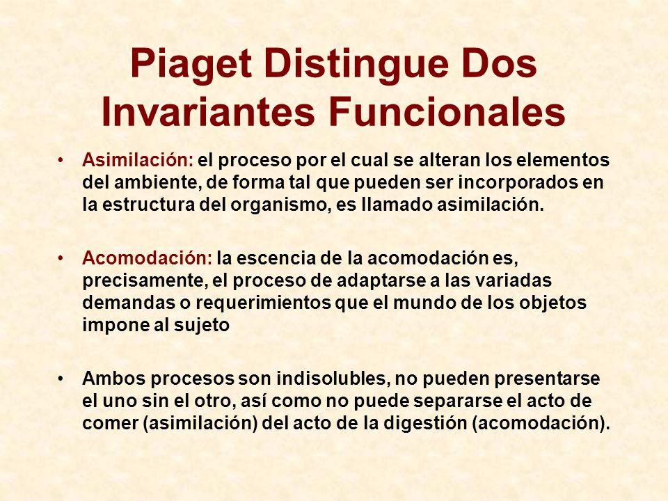 Piaget Distingue Dos Invariantes Funcionales Asimilación: el proceso por el cual se alteran los elementos del ambiente, de forma tal que pueden ser in