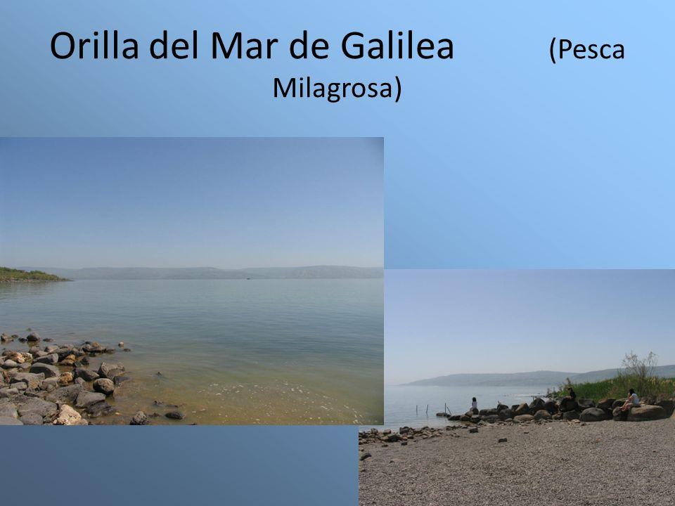 Orilla del Mar de Galilea (Pesca Milagrosa)