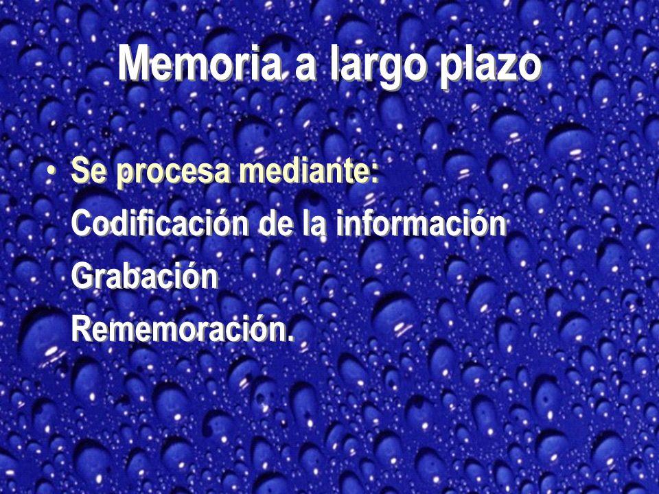 Se procesa mediante: Codificación de la información Grabación Rememoración.