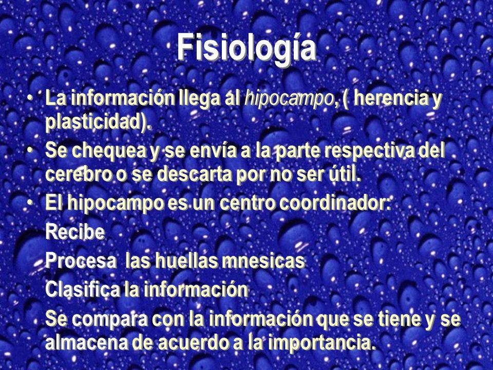 La información llega al hipocampo, ( herencia y plasticidad).