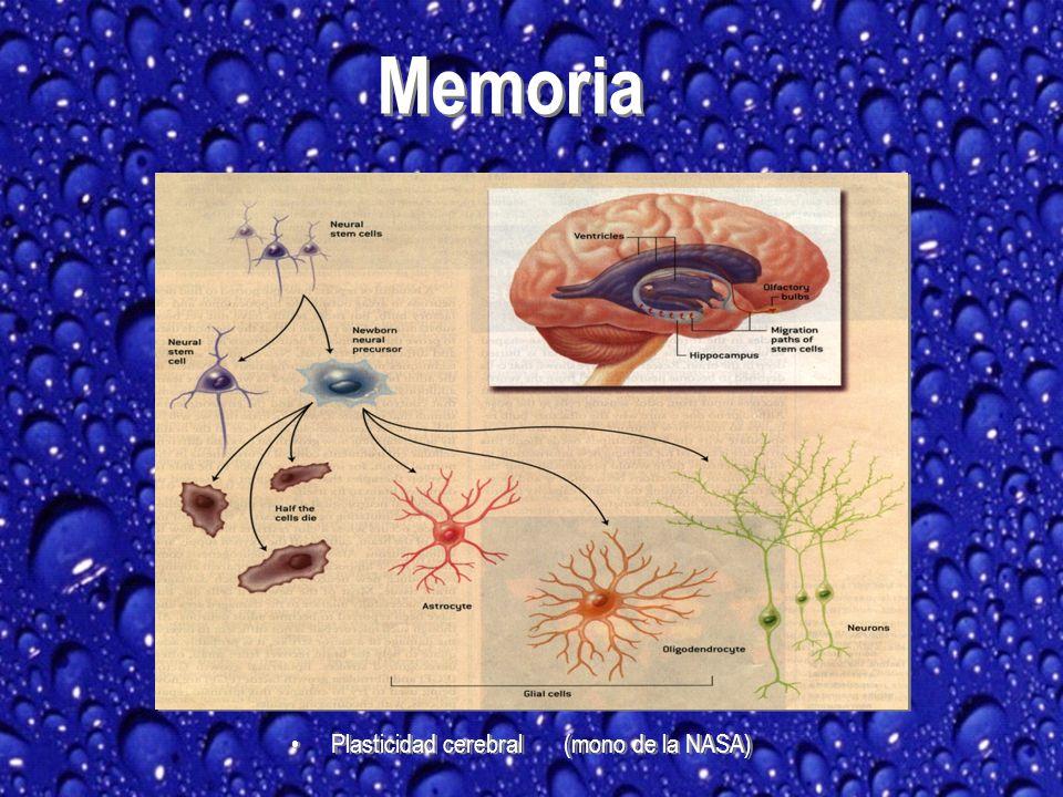 Plasticidad cerebral (mono de la NASA) Memoria