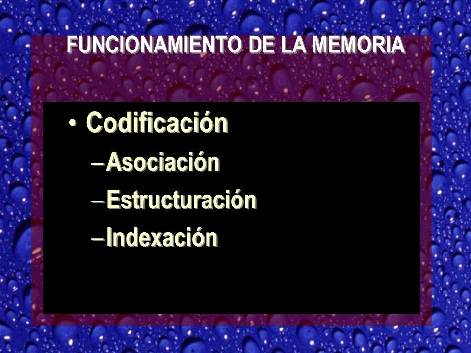 FUNCIONAMIENTO DE LA MEMORIA Codificación – Asociación – Estructuración – Indexación Codificación – Asociación – Estructuración – Indexación