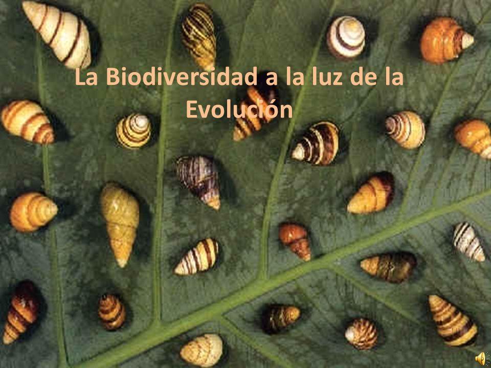 La Biodiversidad a la luz de la Evolución
