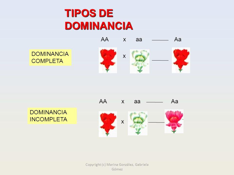 TIPOS DE DOMINANCIA AA x aa Aa x DOMINANCIA COMPLETA AA x aa Aa x DOMINANCIA INCOMPLETA Copyright (c) Marina González, Gabriela Gómez