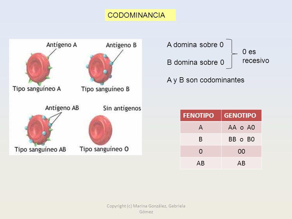 CODOMINANCIA A domina sobre 0 B domina sobre 0 A y B son codominantes FENOTIPOGENOTIPO AAA o A0 BBB o B0 000 AB 0 es recesivo Copyright (c) Marina González, Gabriela Gómez