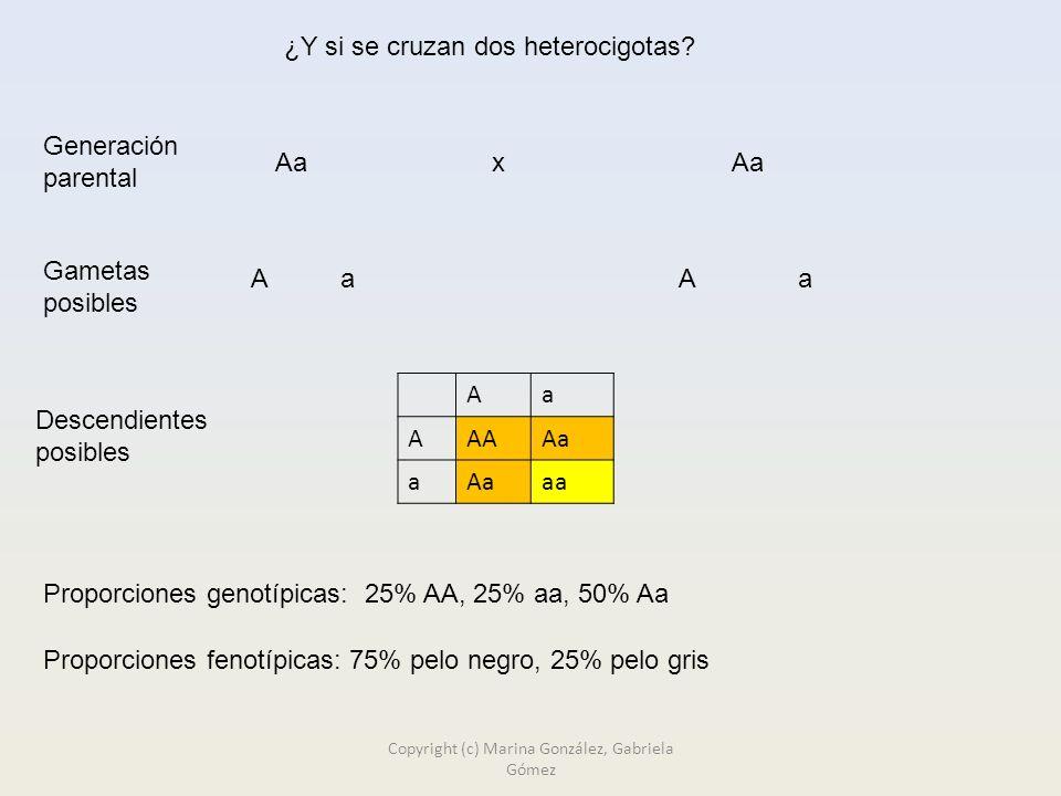 ¿Y si se cruzan dos heterocigotas.