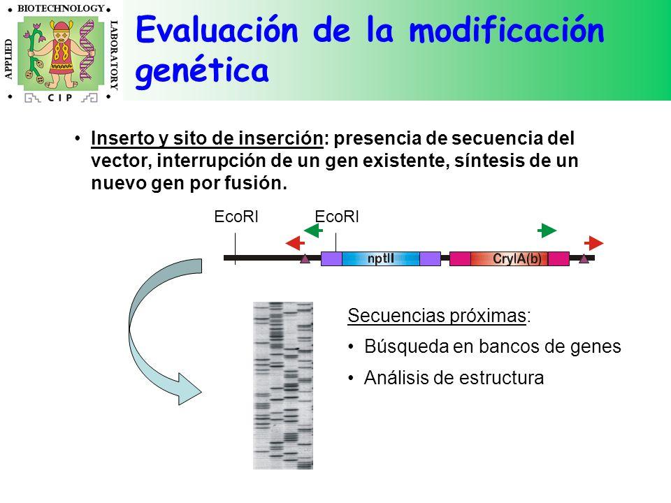Evaluación de la modificación genética Inserto y sito de inserción: presencia de secuencia del vector, interrupción de un gen existente, síntesis de u