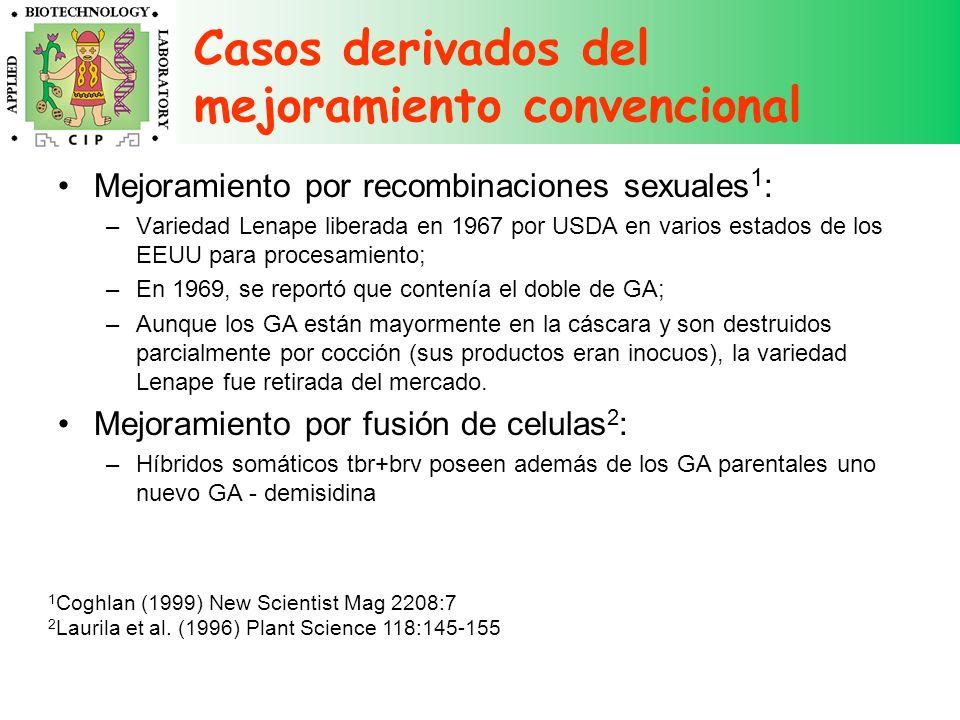 Casos derivados del mejoramiento convencional Mejoramiento por recombinaciones sexuales 1 : –Variedad Lenape liberada en 1967 por USDA en varios estad