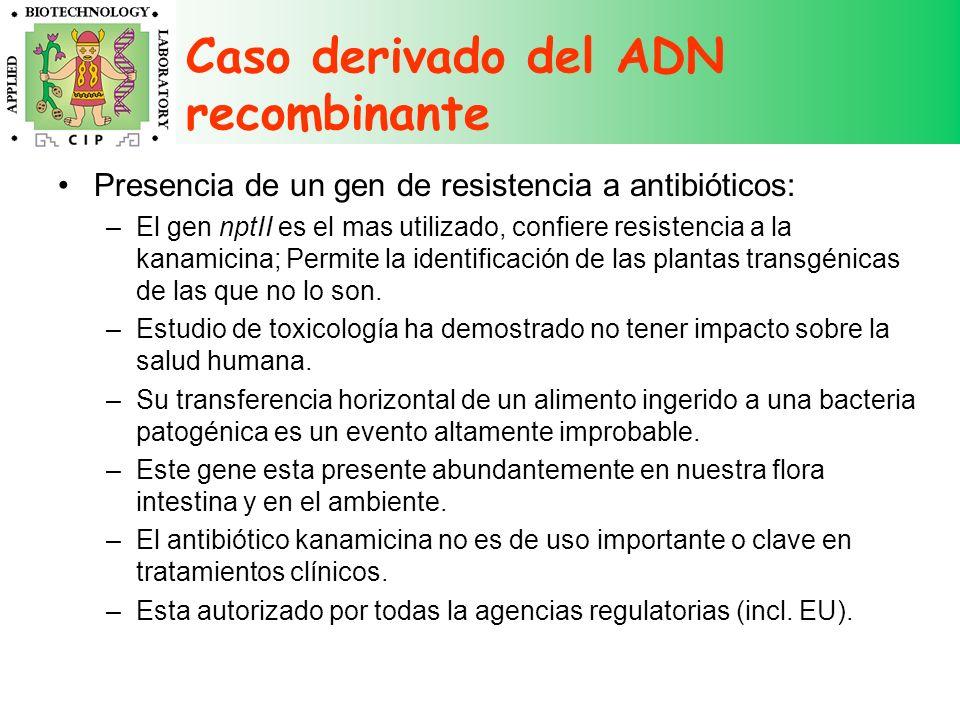 Caso derivado del ADN recombinante Presencia de un gen de resistencia a antibióticos: –El gen nptII es el mas utilizado, confiere resistencia a la kan