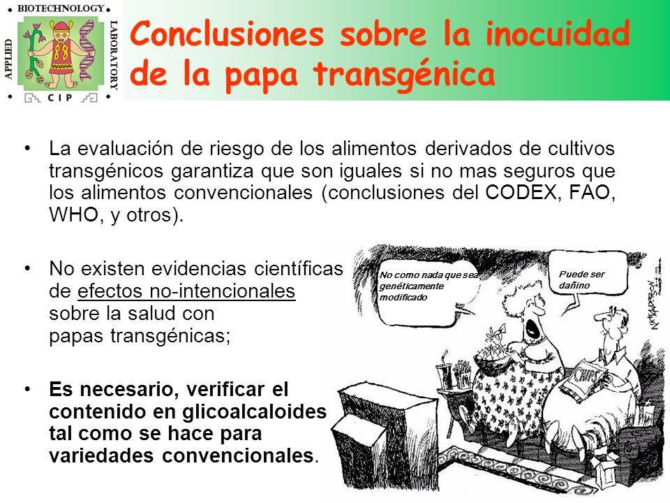 Conclusiones sobre la inocuidad de la papa transgénica No como nada que sea genéticamente modificado Puede ser dañino La evaluación de riesgo de los a