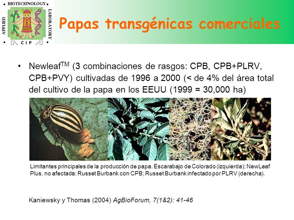 Newleaf TM (3 combinaciones de rasgos: CPB, CPB+PLRV, CPB+PVY) cultivadas de 1996 a 2000 (< de 4% del área total del cultivo de la papa en los EEUU (1