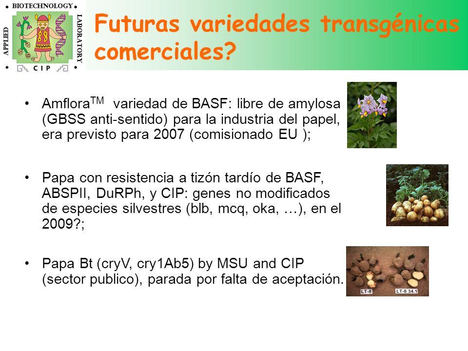 Futuras variedades transgénicas comerciales? Amflora TM variedad de BASF: libre de amylosa (GBSS anti-sentido) para la industria del papel, era previs