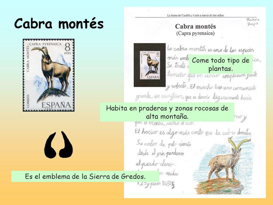 Golondrina Ave migratoria muy conocida. Se alimenta de insectos que captura en el aire e incluso en la superficie del agua. Construye su nido con barr