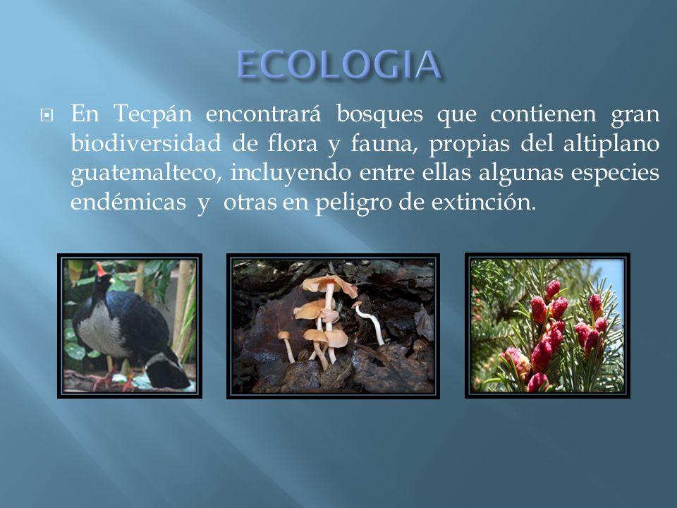 En Tecpán encontrará bosques que contienen gran biodiversidad de flora y fauna, propias del altiplano guatemalteco, incluyendo entre ellas algunas esp