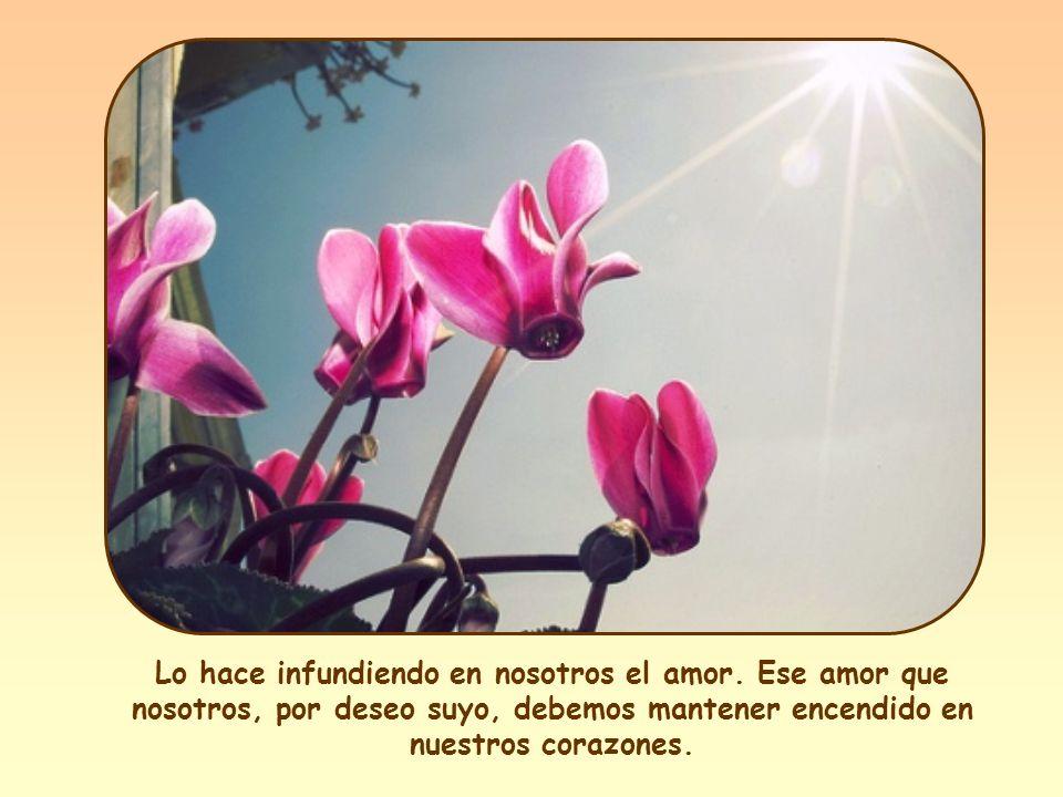 PalabraPalabra de Vida, Vida, publicación mensual del Movimiento de los Focolares.