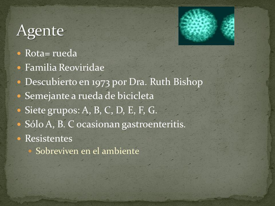 Rota= rueda Familia Reoviridae Descubierto en 1973 por Dra. Ruth Bishop Semejante a rueda de bicicleta Siete grupos: A, B, C, D, E, F, G. Sólo A, B. C