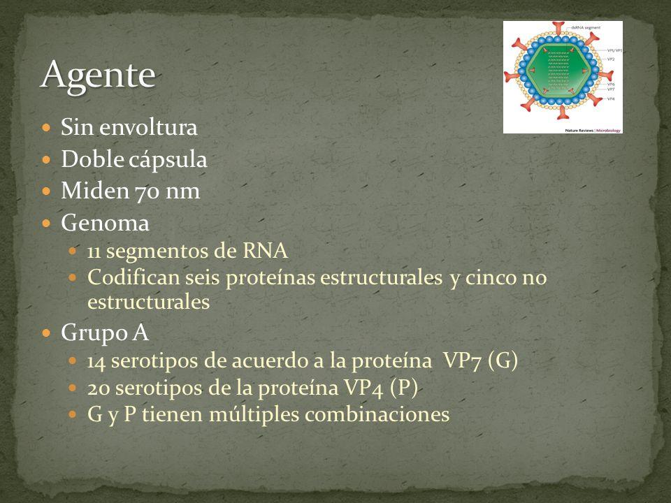 Sin envoltura Doble cápsula Miden 70 nm Genoma 11 segmentos de RNA Codifican seis proteínas estructurales y cinco no estructurales Grupo A 14 serotipo