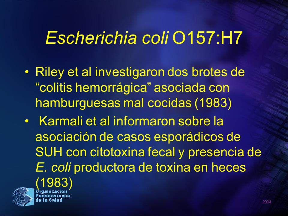 Escherichia coli O157:H7 Riley et al investigaron dos brotes de colitis hemorrágica asociada con hamburguesas mal cocidas (1983) Karmali et al informa