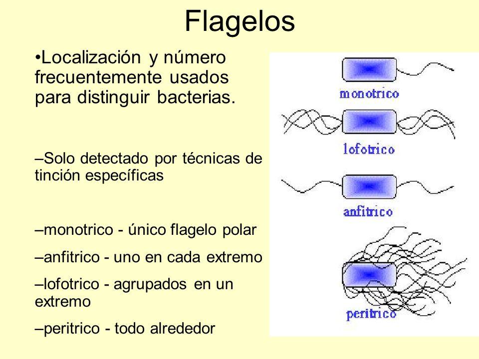 Localización y número frecuentemente usados para distinguir bacterias.