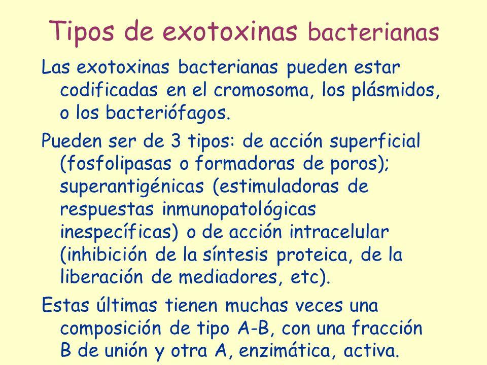 Tipos de exotoxinas bacterianas Las exotoxinas bacterianas pueden estar codificadas en el cromosoma, los plásmidos, o los bacteriófagos.