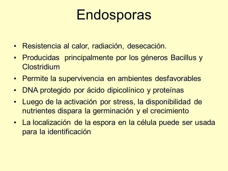 Endosporas Resistencia al calor, radiación, desecación.