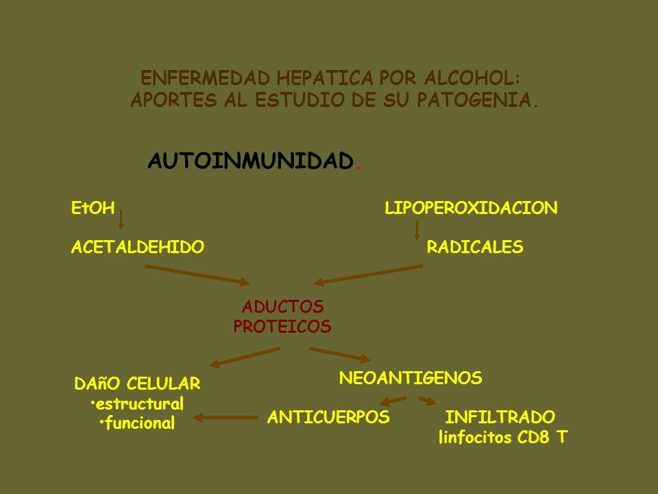 ENFERMEDAD HEPATICA POR ALCOHOL: APORTES AL ESTUDIO DE SU PATOGENIA. AUTOINMUNIDAD. EtOH ACETALDEHIDO LIPOPEROXIDACION RADICALES ADUCTOS PROTEICOS DAñ